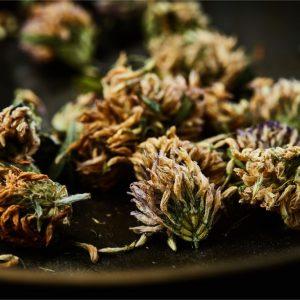 תערובות צמחי מרפא